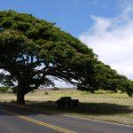 ハワイの教え「ロカヒ」とは